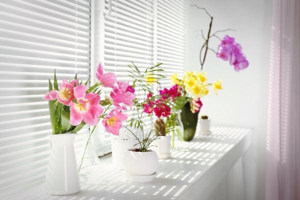 【50+學院】如何第一次養蘭花、做苔玉就上手?風格植栽工作坊活動花絮