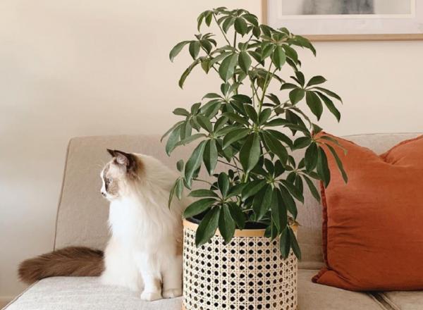 打造居家療癒綠角落!8款觀賞用室內植物推薦,只要一株家就變美了