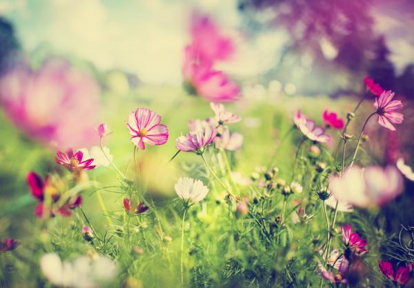 環保與減少後代負擔,樹葬與花葬如何進行?