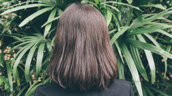 如何維持髮量、延緩白髮?向學文:善用馬尾草,10年頭髮變多了