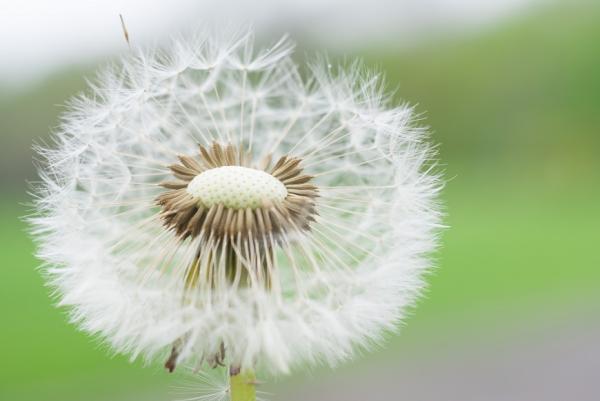【杜丞蕓專欄】把肺養好!每日按3穴道,減壓不讓病毒有機可趁